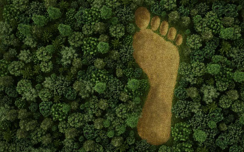 como empezar a ser ecológico